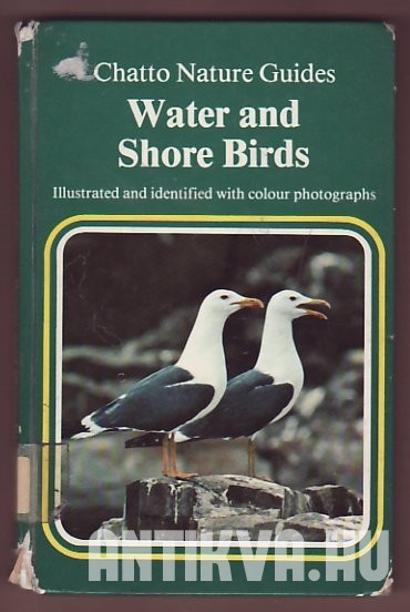 Water and Shore Birds